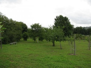 Dorking Community Orchard 1