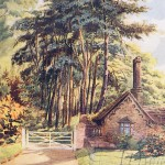 G Gardiner, Pine Trees at Bury Hill