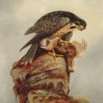 Denham Jordan, Birds of Prey, Falcon and Dead Bird