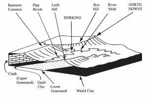Upper: Geophantasmogram of Dorking and its surroundings showing the relationship between geology and scenery. Interbedded sedimentary strata of the Cretaceous Period dip north forming the northern limb of the Wealden anticline, the southern limb of the London basin. Wellcemented hard strata form hills, soft sediments form valleys. Dorking's caves were excavated in the soft Folkestone Sands at the top of the Lower Greensand.